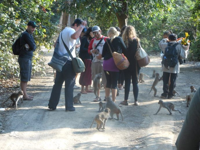 Taking a walk through a monkey village