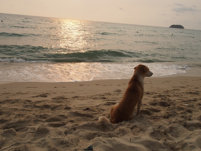 Another dog who came to pose for my photo. I had a lot of canine friends in Koh Chang!